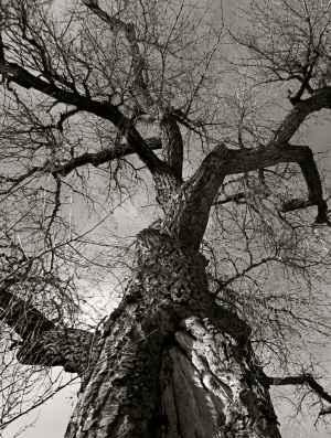 tree-wall-1