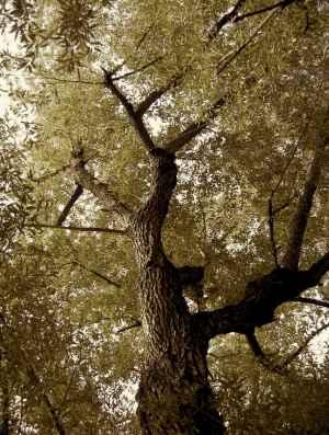 tree-wall-13