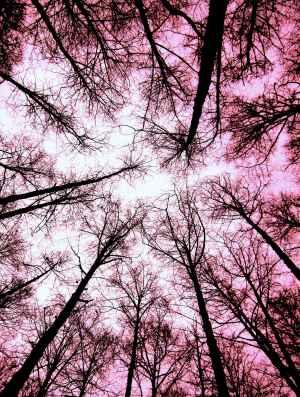 tree-wall-17