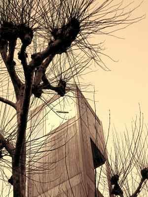 tree-wall-21b