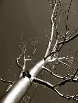 tree-wall-5