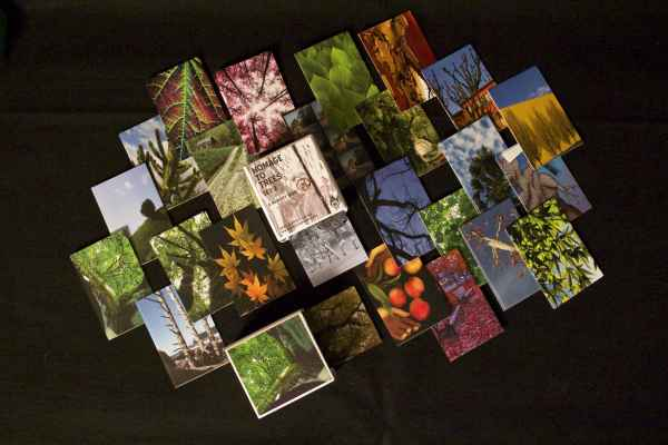 memory-cards-trees-set-2-a