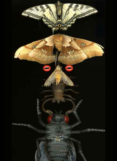 butterfly-insect-totem
