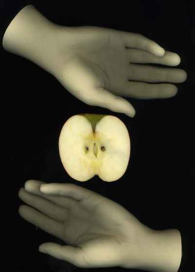 hands-with-apple