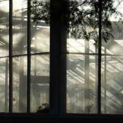 conservatory-shadows