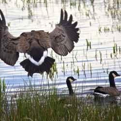 nisqually-landing