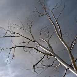 roxy-paines-metal-tree
