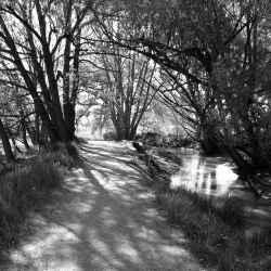 cottonwood-trail