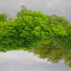 mirror-trees