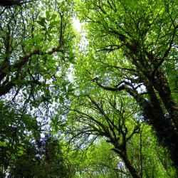 trees-overhead