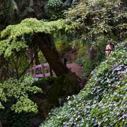tumwater-falls-park